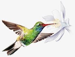 logo_ami_colibri